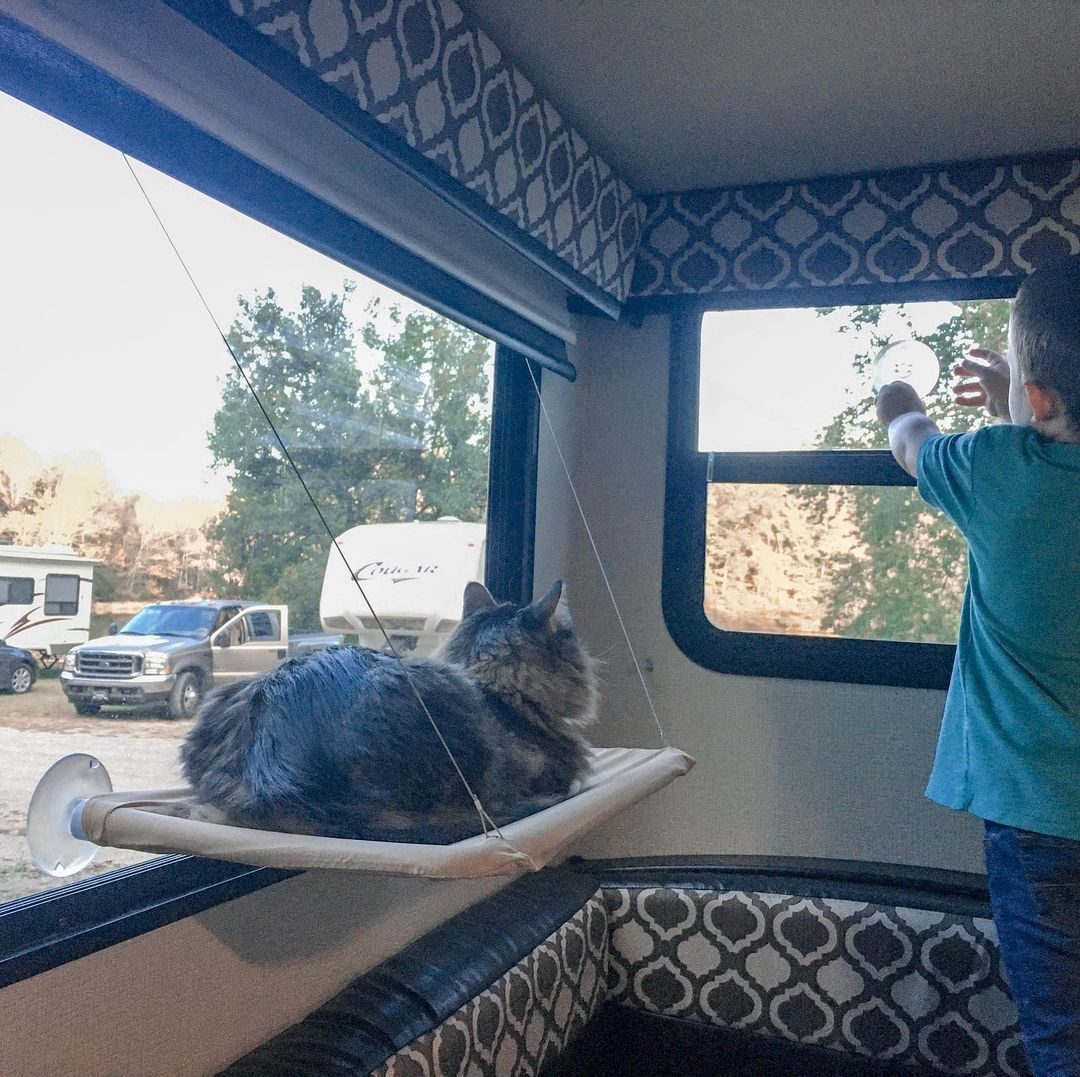 How to Travel with Pets in an RV